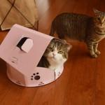 大地震のとき外人が選んだのは?hopeとwishの違いを猫のまるが教えてくれた